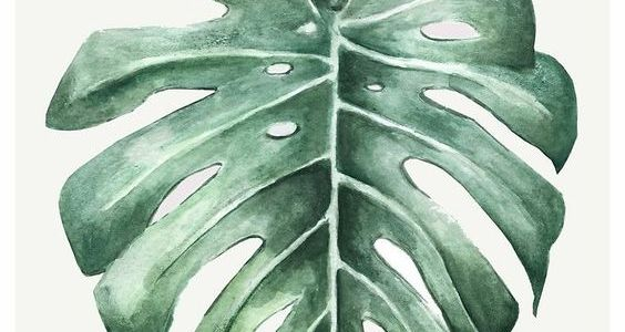 Folha da Selva
